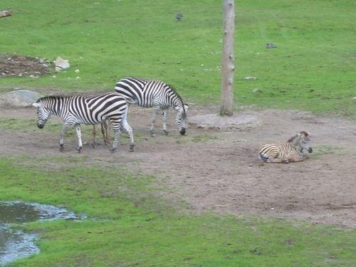 rabatt borås djurpark